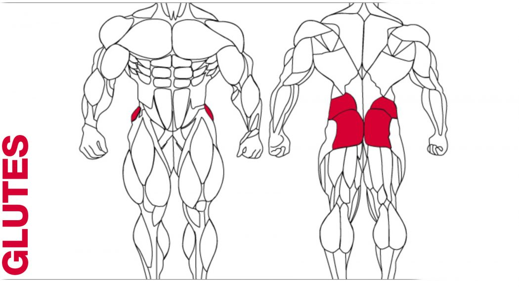 glutes_2048x2048 Top 10 Strongest Muscles in The Body