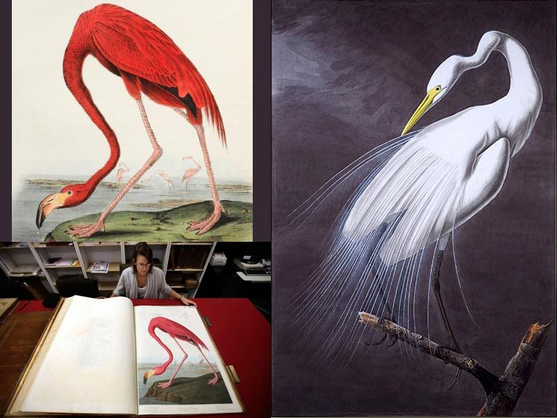 Birds-of-America-dec-2010 Top 10 Most Expensive Artifacts in the World