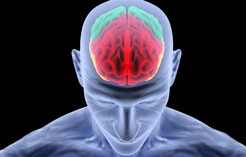 Brain_004 Top 10 Hottest Topics in Brain Sciences