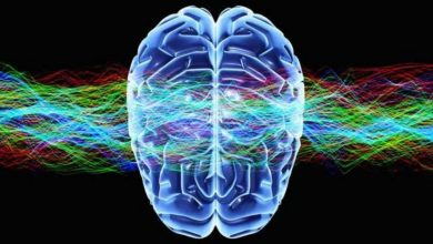 Photo of Top 10 Hottest Topics in Brain Sciences