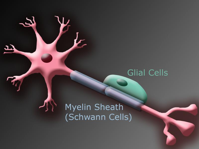 neuron5 Top 10 Hottest Topics in Brain Sciences