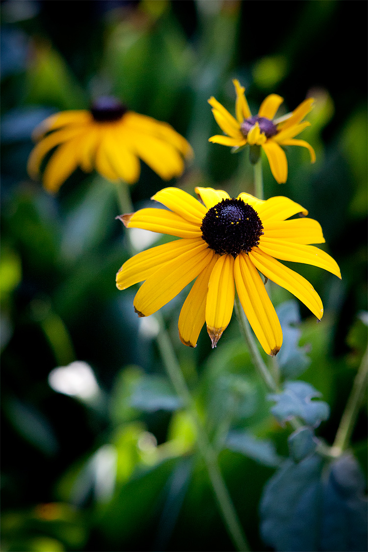 08_22_2012 Top 10 Flowers That Bloom all Year