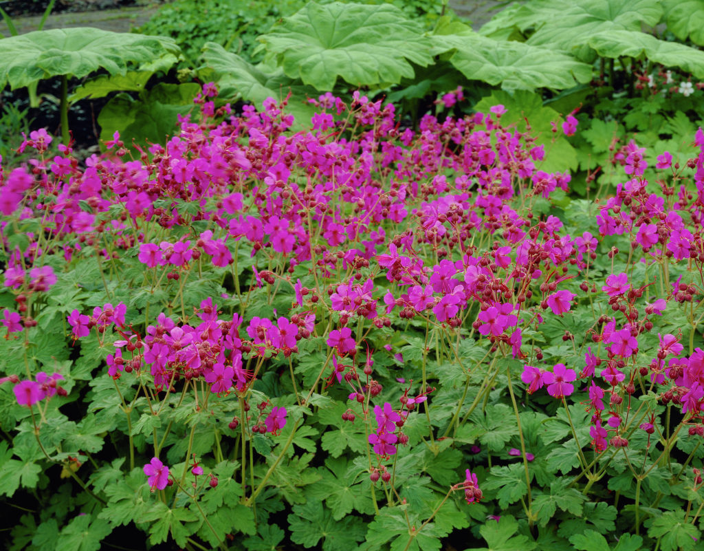 2a109182e73a64f92b9fac0ee4df0795 Top 10 Flowers That Bloom all Year