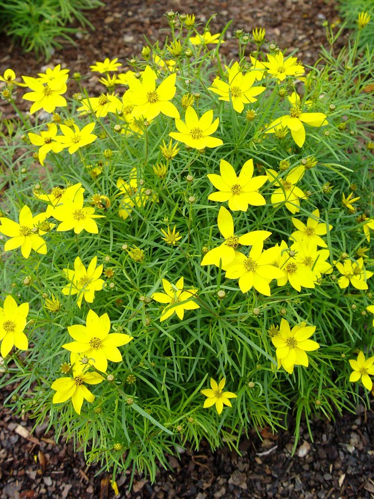 353be5c0642a09772680dd4106bbc859 Top 10 Flowers That Bloom all Year