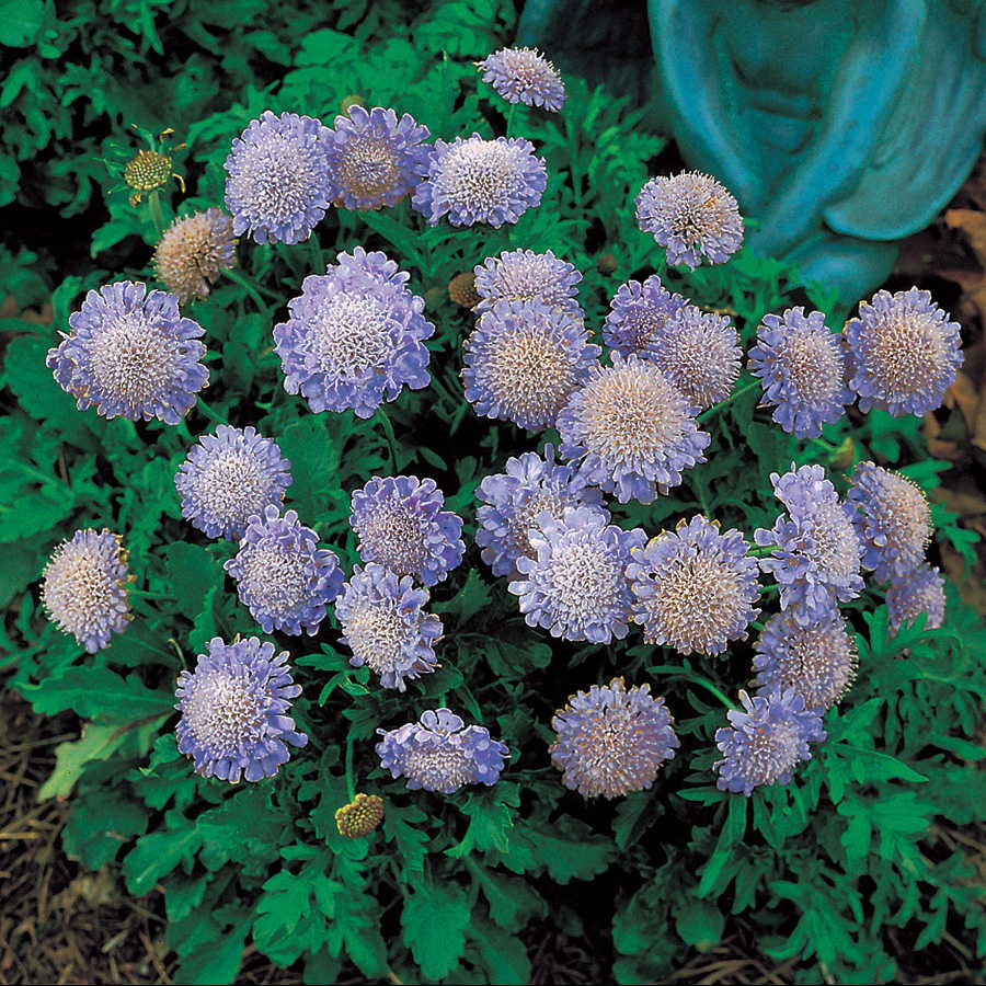44189 Top 10 Flowers That Bloom all Year