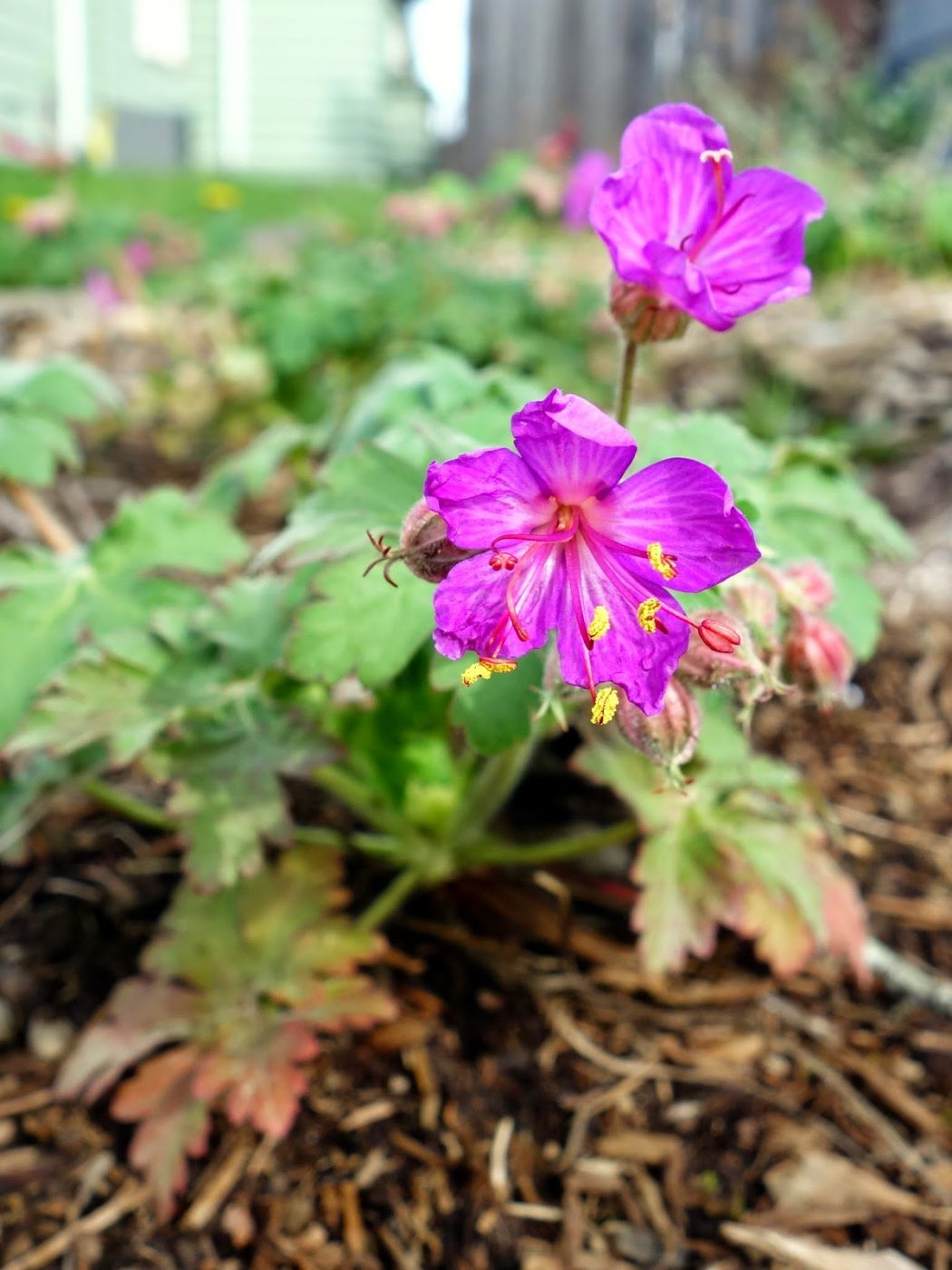 DSC03637 Top 10 Flowers That Bloom all Year