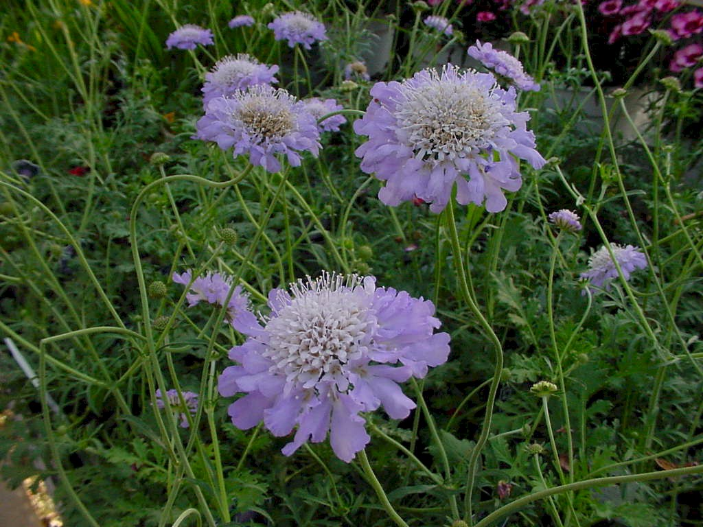 Scabutblu Top 10 Flowers That Bloom all Year