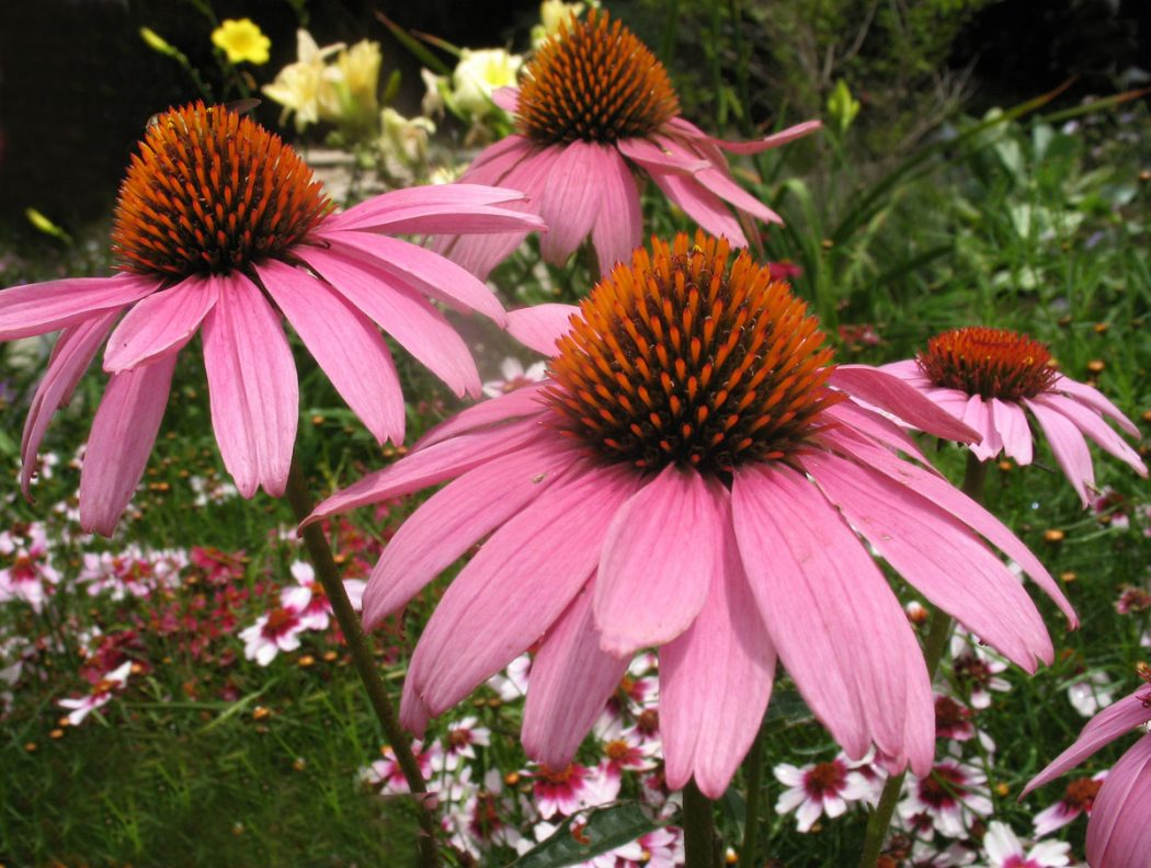 Top 10 Flowers That Bloom All Year Poutedcom
