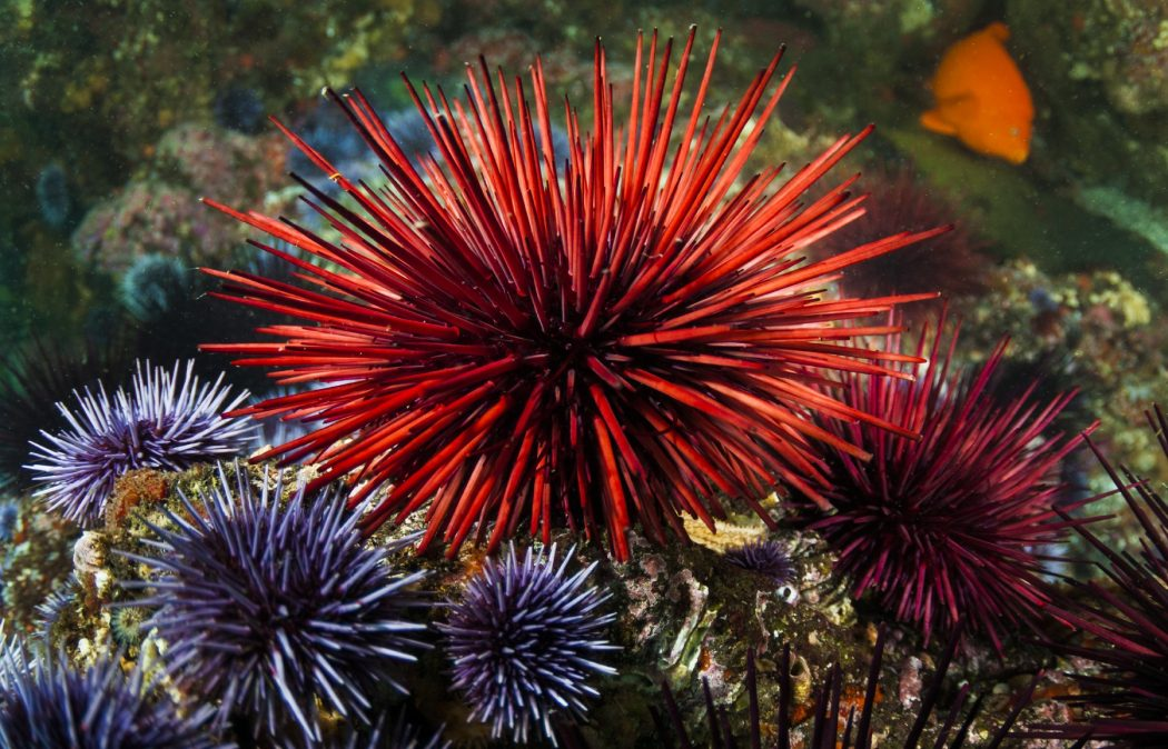 1_seaurchin_42-65991031 11 Tips on Mixing Antique and Modern Décor Styles