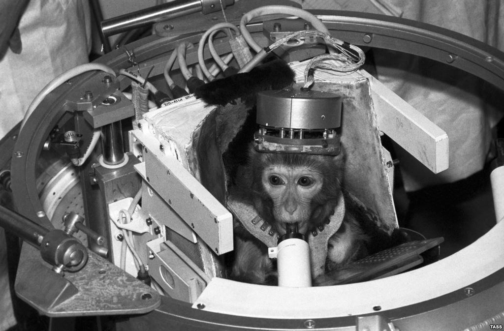 BA59B6EF-8845-413F-9250-E4A83DB256D1_mw1024_s_n 5 Animals Who Have Launched Into Space