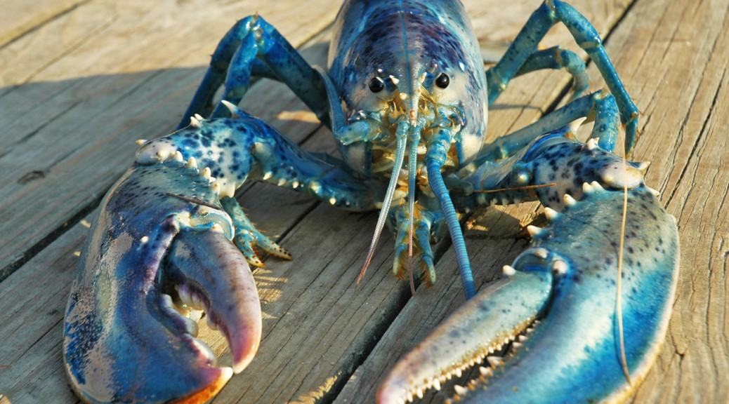 Blue-lobster-520a-1038x576 11 Tips on Mixing Antique and Modern Décor Styles