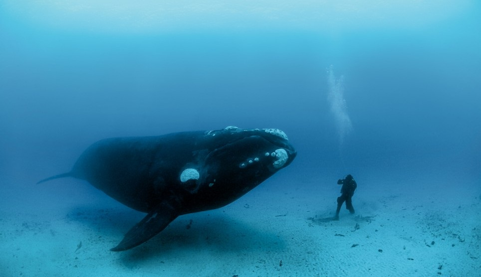 Bowhead-Whale-Images 10 Animals That Outlive People