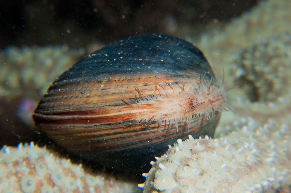 Ocean-Quahog 10 Animals That Outlive People