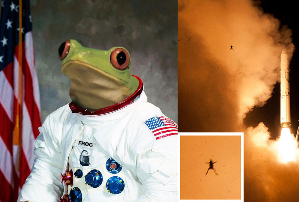 astronaut-1000 5 Animals Who Have Launched Into Space