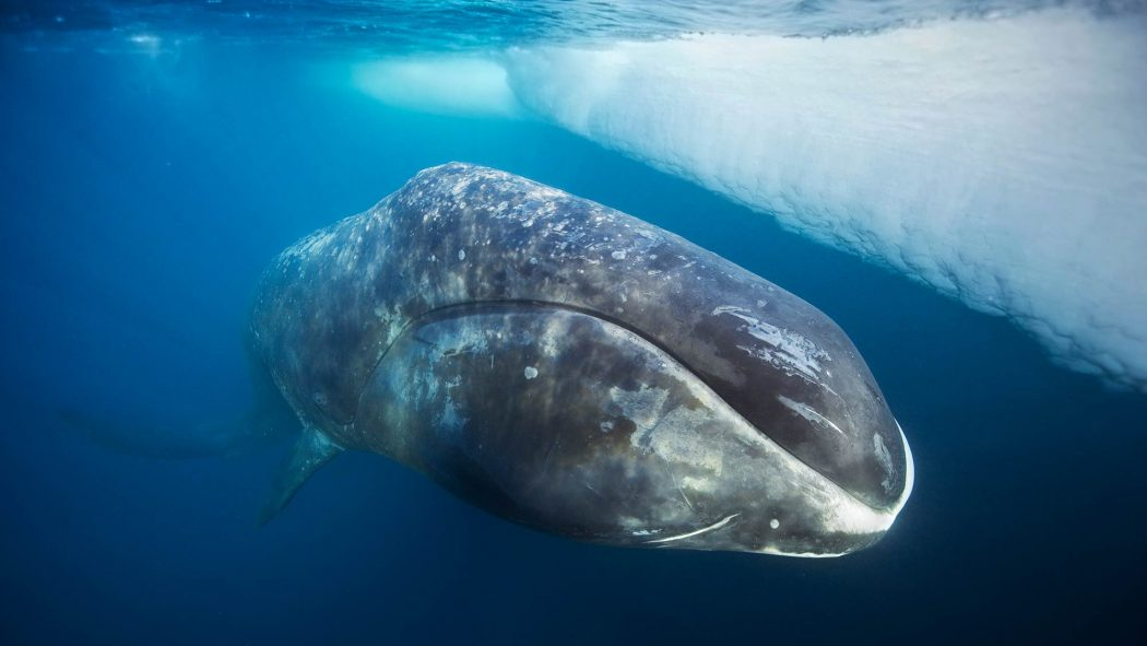 bowhead_whale 11 Tips on Mixing Antique and Modern Décor Styles
