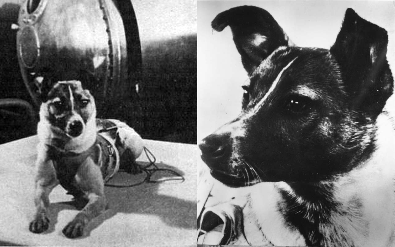 laika-1st-dog-in-space 5 Animals Who Have Launched Into Space