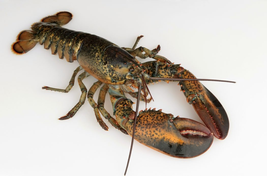lobster 11 Tips on Mixing Antique and Modern Décor Styles