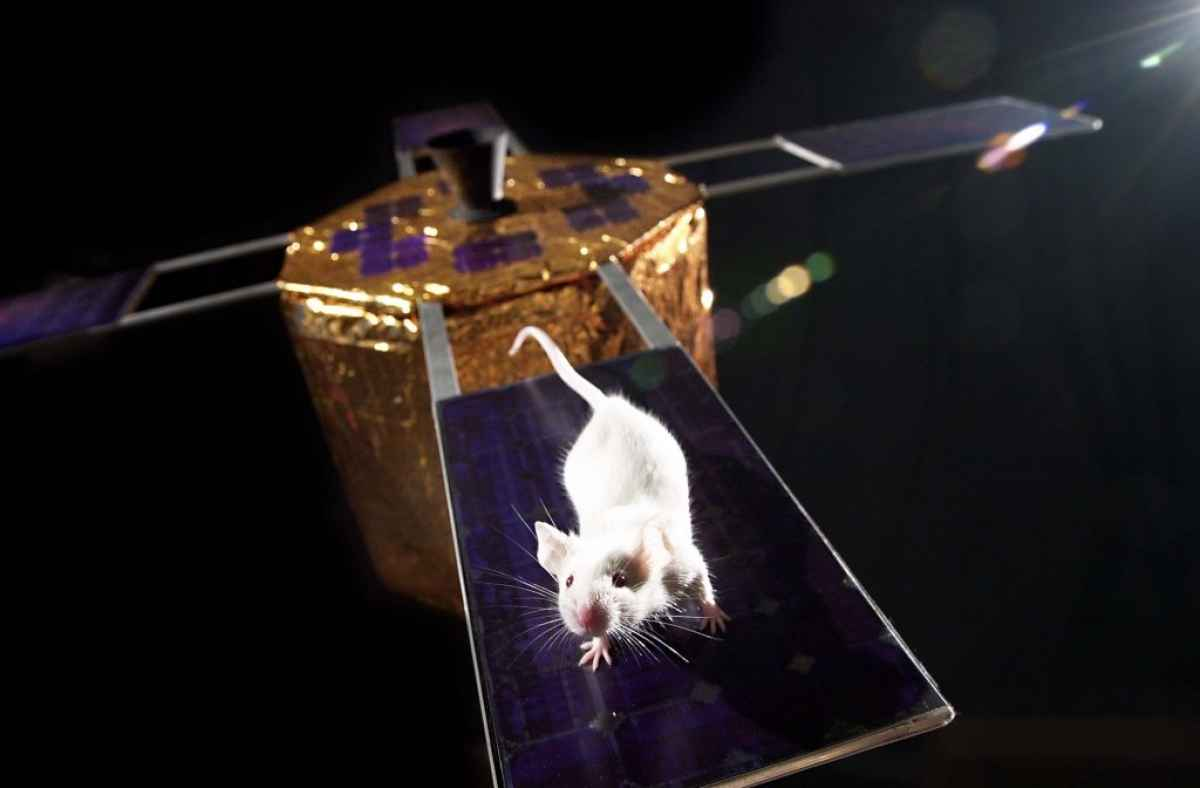 mouse-on-a-solar-panel 5 Animals Who Have Launched Into Space