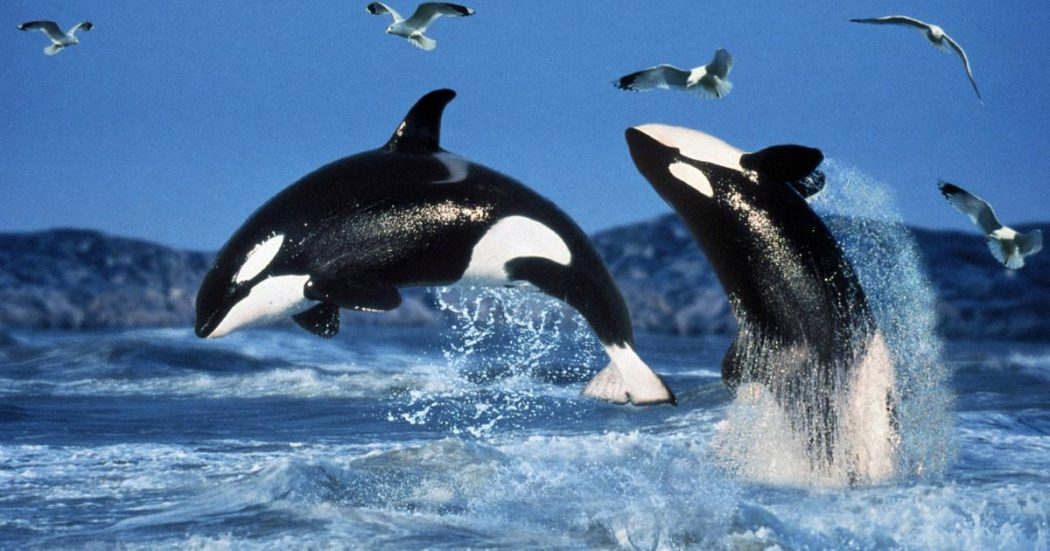 orcas-jumping 11 Tips on Mixing Antique and Modern Décor Styles