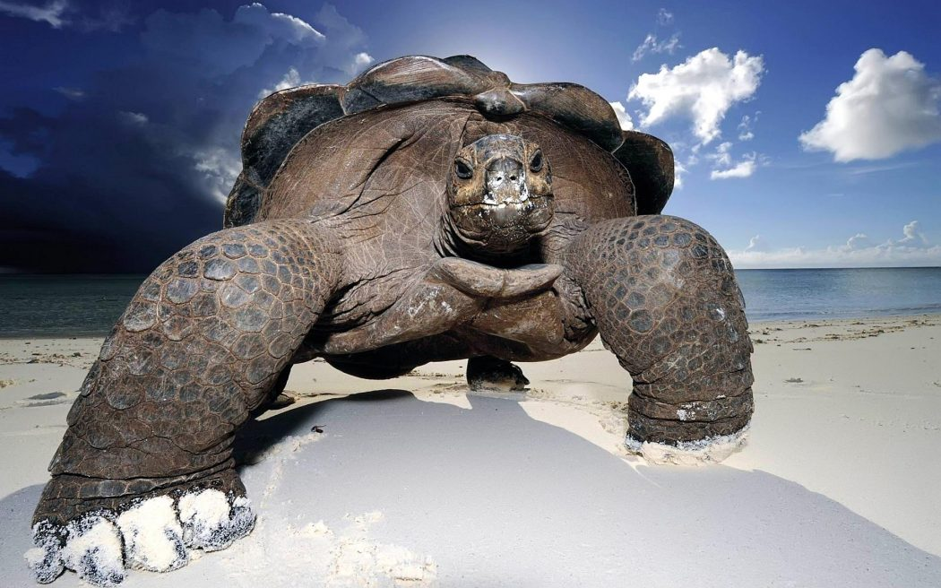 wallpaper-galapagos-giant-tortoise 11 Tips on Mixing Antique and Modern Décor Styles