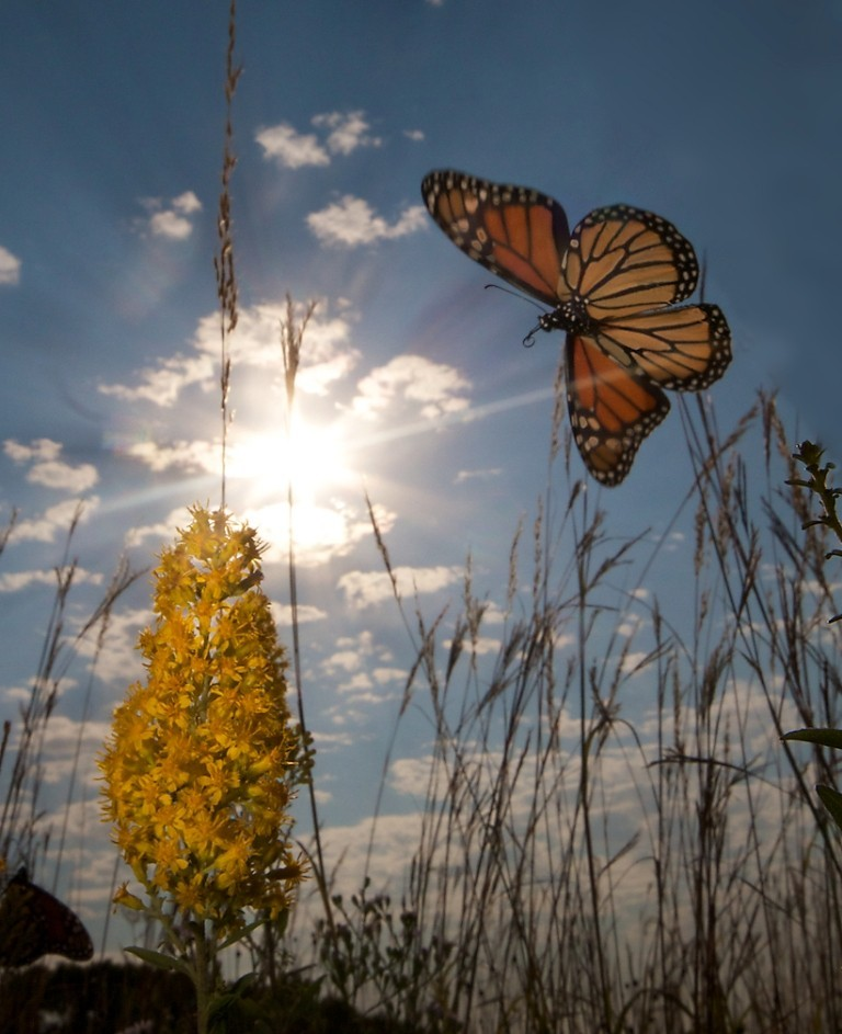 the-mountain-of-butterflies-1-1 6 Interesting Facts about the Mountain of Butterflies