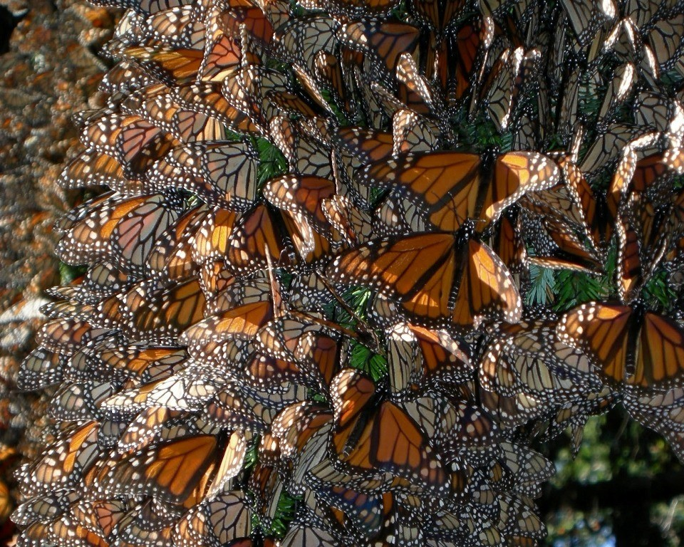 the-mountain-of-butterflies-10 6 Interesting Facts about the Mountain of Butterflies