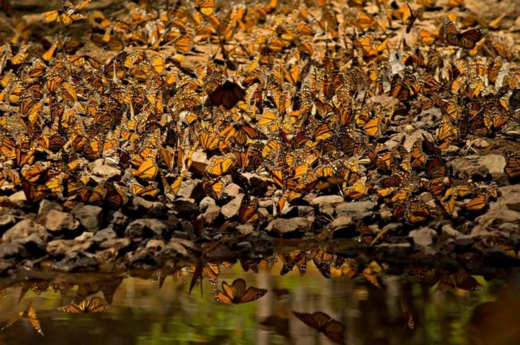 the-mountain-of-butterflies-11 6 Interesting Facts about the Mountain of Butterflies