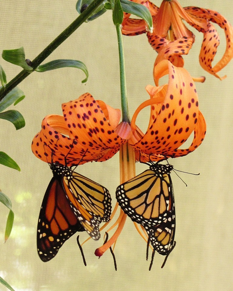 the-mountain-of-butterflies-12 6 Interesting Facts about the Mountain of Butterflies