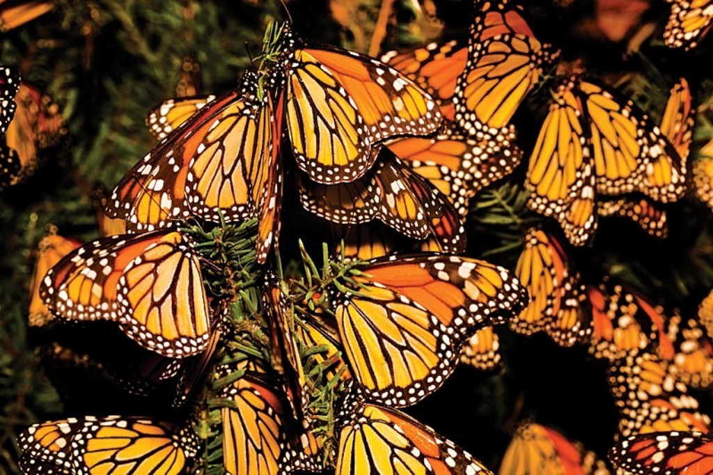 the-mountain-of-butterflies-13 6 Interesting Facts about the Mountain of Butterflies