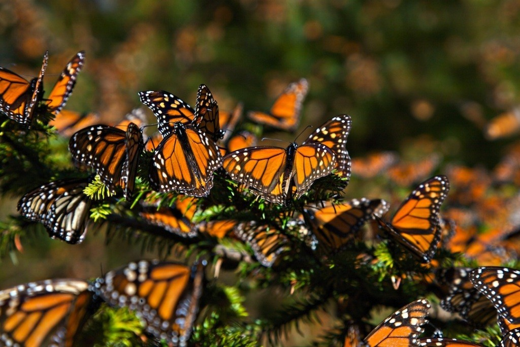 the-mountain-of-butterflies-14 6 Interesting Facts about the Mountain of Butterflies