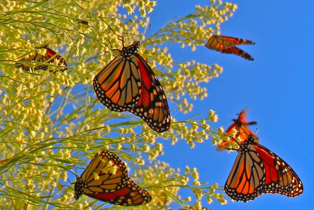 the-mountain-of-butterflies-15 6 Interesting Facts about the Mountain of Butterflies