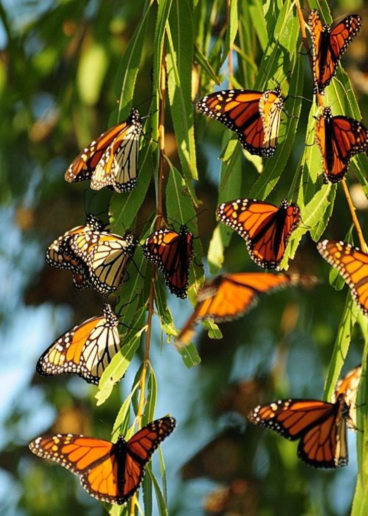 the-mountain-of-butterflies-16 6 Interesting Facts about the Mountain of Butterflies