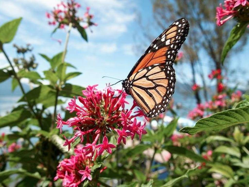the-mountain-of-butterflies-17 6 Interesting Facts about the Mountain of Butterflies