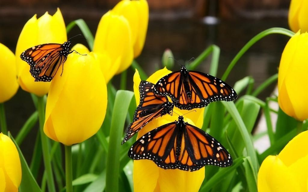 the-mountain-of-butterflies-18 6 Interesting Facts about the Mountain of Butterflies