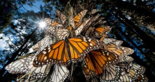 6 Interesting Facts about the Mountain of Butterflies