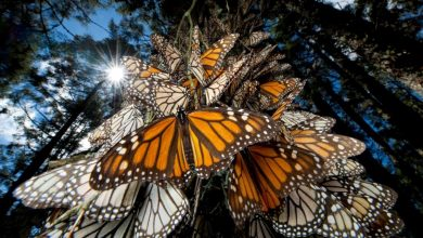 Photo of 6 Interesting Facts about the Mountain of Butterflies