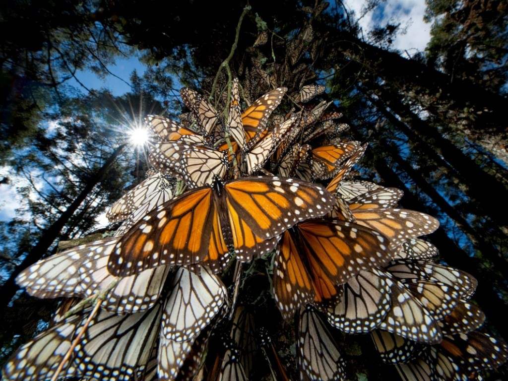 the-mountain-of-butterflies-19 6 Interesting Facts about the Mountain of Butterflies