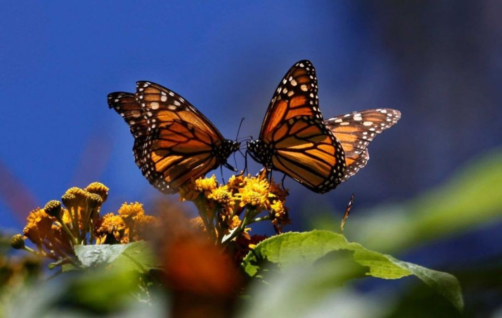 the-mountain-of-butterflies-2-1 6 Interesting Facts about the Mountain of Butterflies