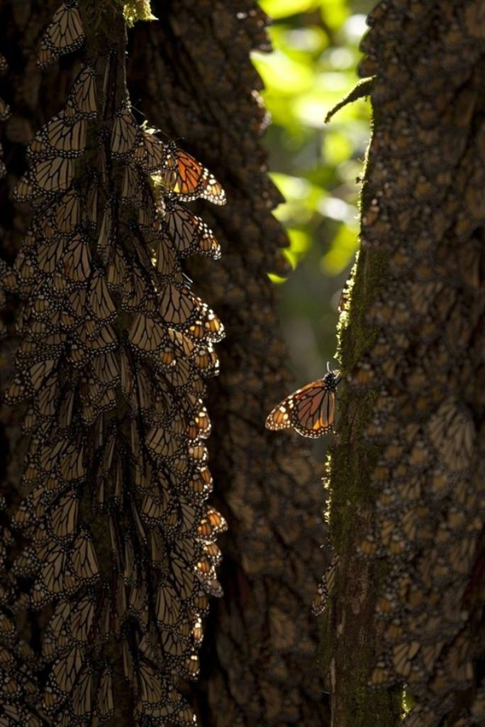 the-mountain-of-butterflies-20 6 Interesting Facts about the Mountain of Butterflies