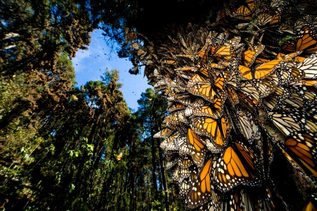 the-mountain-of-butterflies-21 6 Interesting Facts about the Mountain of Butterflies