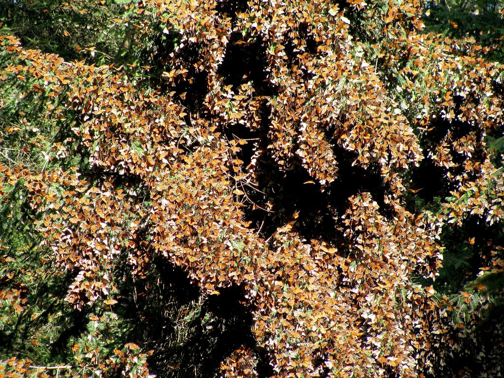 the-mountain-of-butterflies-22 6 Interesting Facts about the Mountain of Butterflies