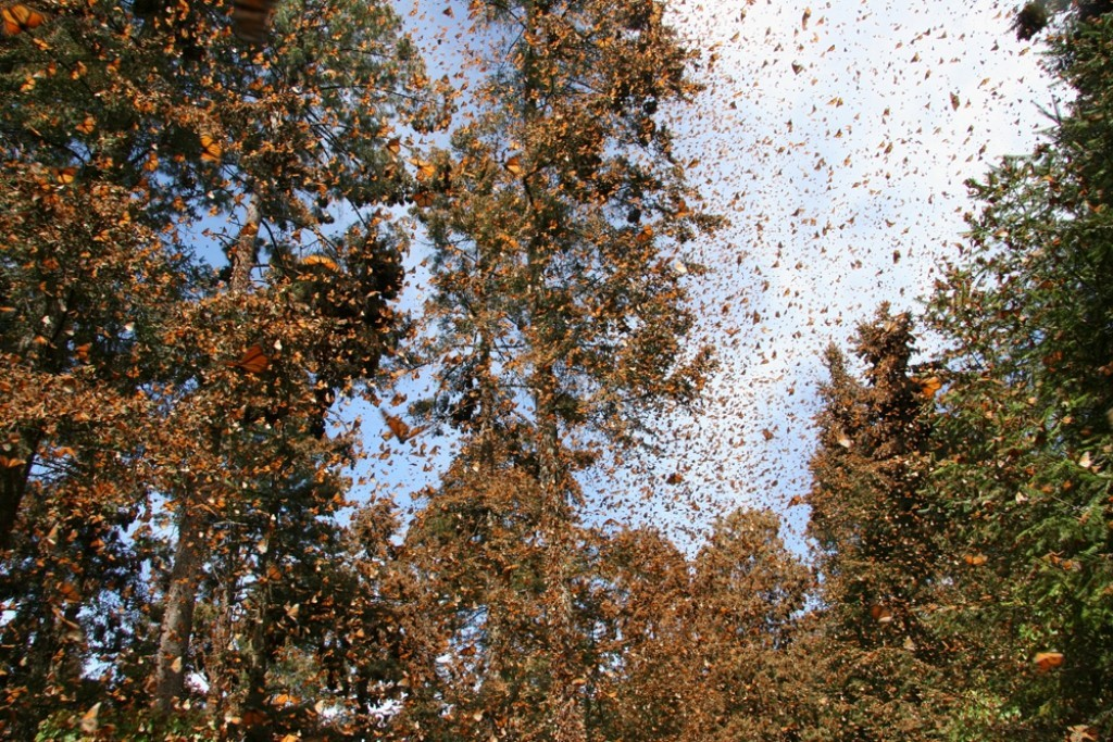the-mountain-of-butterflies-23 6 Interesting Facts about the Mountain of Butterflies