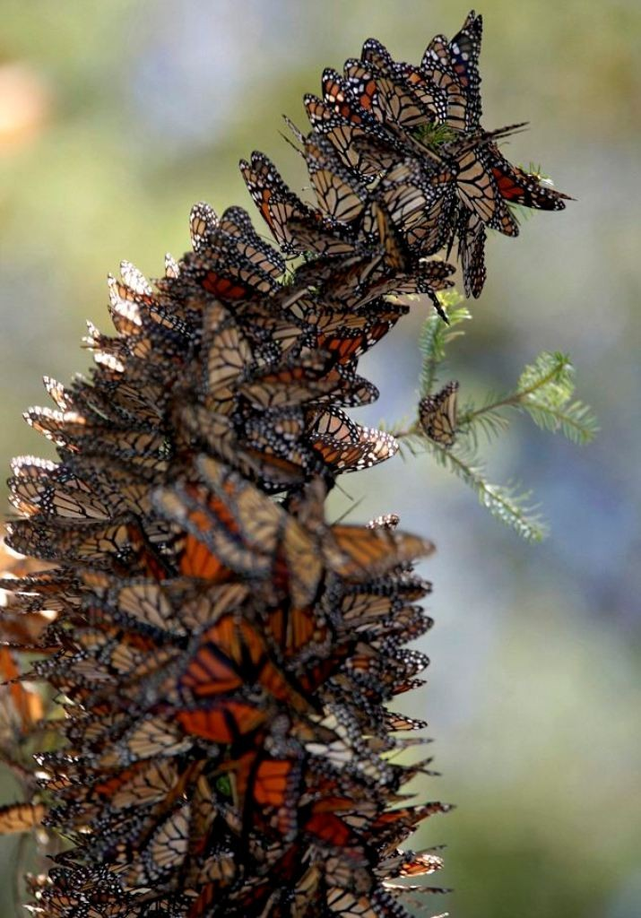the-mountain-of-butterflies-24 6 Interesting Facts about the Mountain of Butterflies