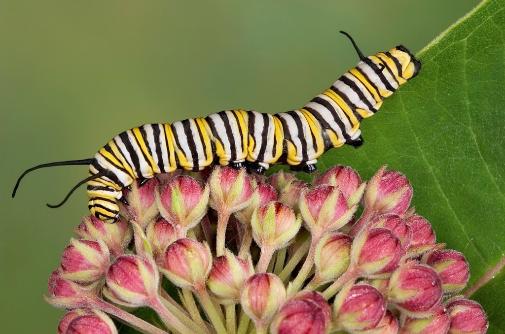 the-mountain-of-butterflies-25 6 Interesting Facts about the Mountain of Butterflies