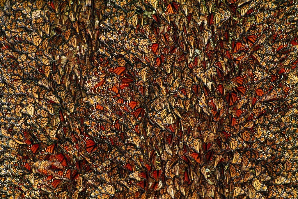 the-mountain-of-butterflies-27 6 Interesting Facts about the Mountain of Butterflies