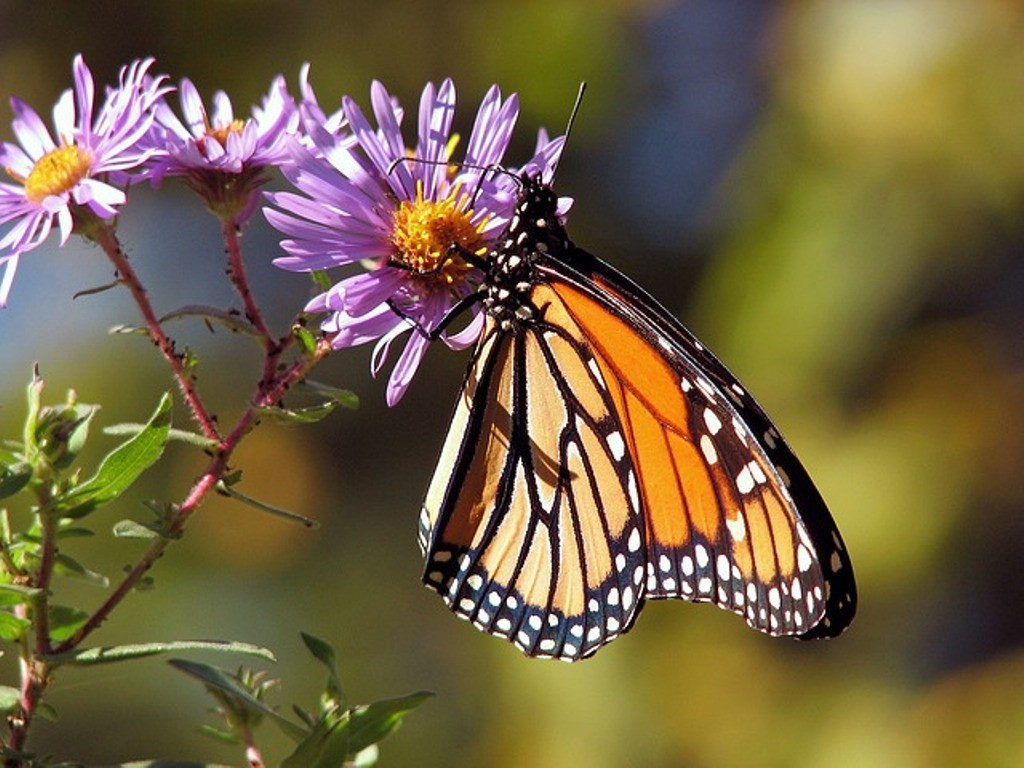 the-mountain-of-butterflies-3-1 6 Interesting Facts about the Mountain of Butterflies