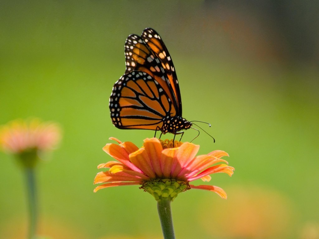 the-mountain-of-butterflies-4-1 6 Interesting Facts about the Mountain of Butterflies