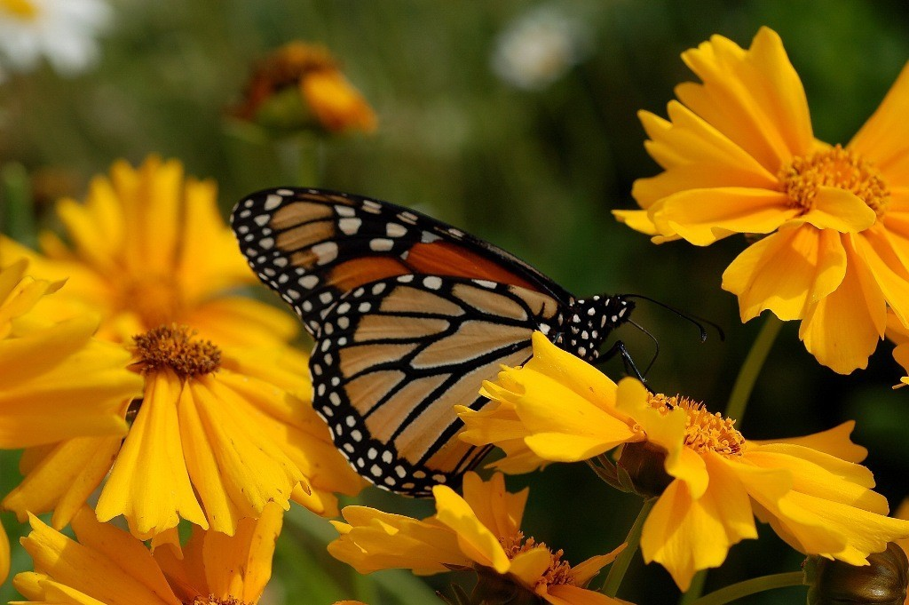 the-mountain-of-butterflies-5-1 6 Interesting Facts about the Mountain of Butterflies