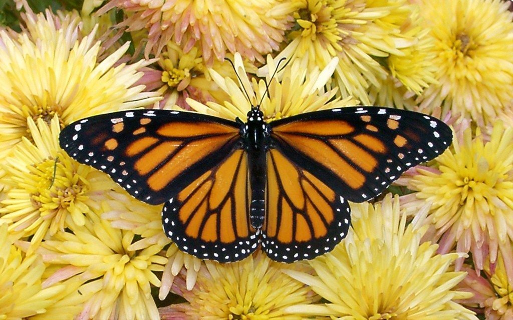 the-mountain-of-butterflies-6-1 6 Interesting Facts about the Mountain of Butterflies