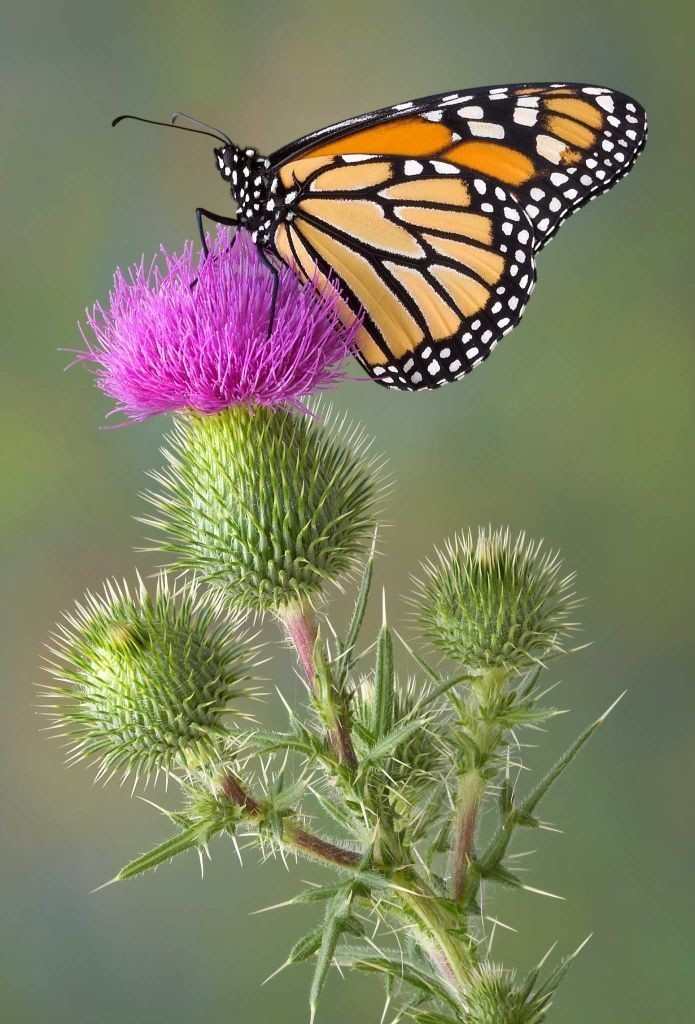 the-mountain-of-butterflies-6 6 Interesting Facts about the Mountain of Butterflies